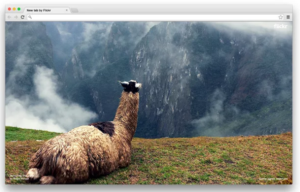 flickr-chrome-extension